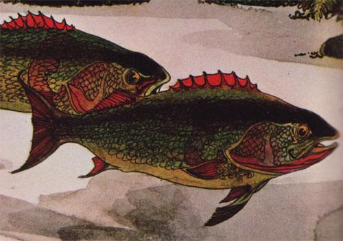 Dean-DetailFish